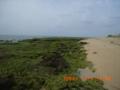 瀬長島のアーサー