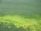 古宇利島のアーサー