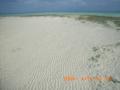 奥武島の浜の風紋