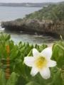 宮古島・砂山ビーチのユリ