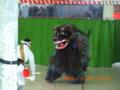 八月踊り・獅子舞(2006.9.30)