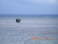 多良間島(2006.10.2)