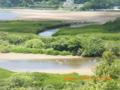 奄美大島住用のマングローブ