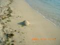 豊見城のビーチにて