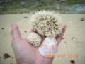 津堅島の海の恵み
