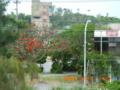 辺土名バス停の一本デイゴの木