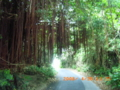 宮古島地元の人しか通らない昼でも薄暗い道