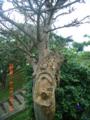 デイゴヒメコバチで枯れつつあるデイゴの木(宮古島にて)