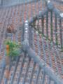 琉球の赤瓦屋根