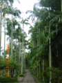 沖縄本島・東南植物楽園にて