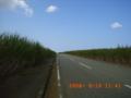 伊良部島のサトウキビ畑