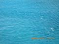 奄美群島の海