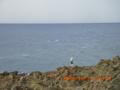 釣り天国・徳之島
