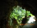 沖永良部島洞窟へ