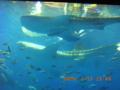 本島北部・美ら島水族館