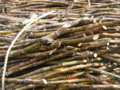 宮古島サトウキビ収穫
