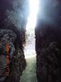 粟国島隆起サンゴの狭間にて
