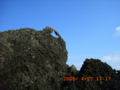粟国島・隆起石灰岩の奇形