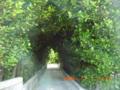 渡名喜島フクギ並木