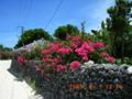 竹富島の夏
