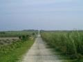 波照間島・ムシャーマの日のキビ畑の朝
