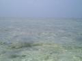 ニシ(北)浜の海水がこの世のものとは・・