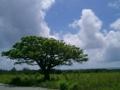 波照間島・印象に残る一本の木