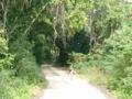 黒島・南神山御嶽近くの野道(2005.1.27)