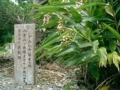波照間島・オヤケアカハチ誕生の地(2005.5.18)