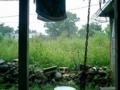 鳩間島・亜熱帯のスコールは言語を絶する