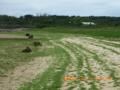 アオサの大量発生、石垣島大浜海岸