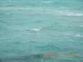 池間島の荒れるサンゴ礁