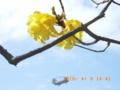 沖縄の自然に米軍ヘリ