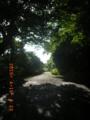 知花グスクへの道