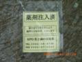 石垣市市役所のデイゴ再生中・薬剤注入終了
