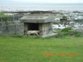金武湾の拝所と猫