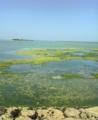 伊是名島の5月の海