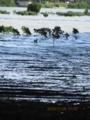 漫湖と国場川とマングローブ