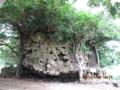 石垣島・大浜海岸の大津波によるサンゴ大石