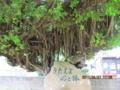 浜比嘉島のガジュマル