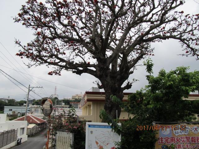 沖縄市与儀公民館のデイゴ