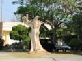 国頭村辺土名ヤンバルクイナ荘前の枯れたデイゴ木