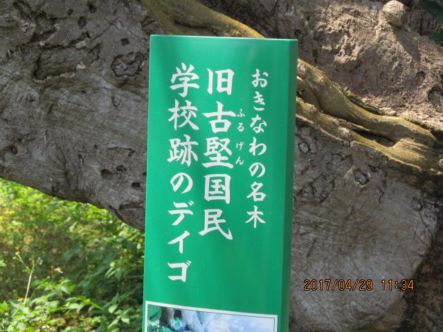 読谷村古堅旧国民学校のデイゴ