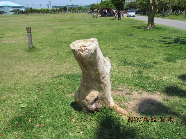 宜野湾市海浜公園のデイゴの死