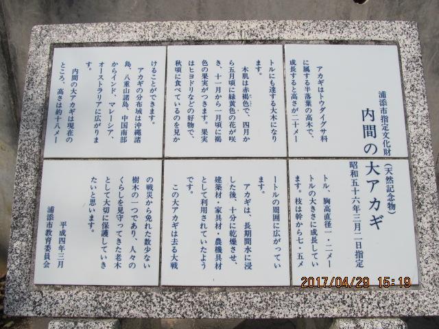 浦添市内間大アカギ