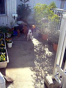 f:id:kazoo2008:20081123205733j:image