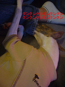 f:id:kazoo2008:20081214202724j:image