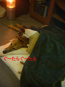 f:id:kazoo2008:20081214202728j:image