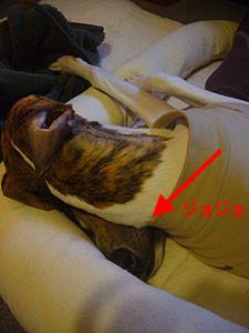 f:id:kazoo2008:20081214205750j:image