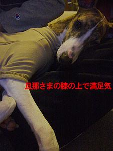 f:id:kazoo2008:20081220091529j:image